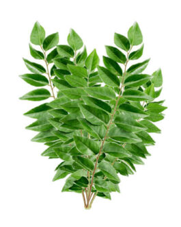 100% Pure Curry Leaves